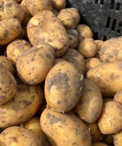 Case: Aardappelshop