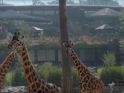 Case: Safari Meeting Centre Burgers Zoo