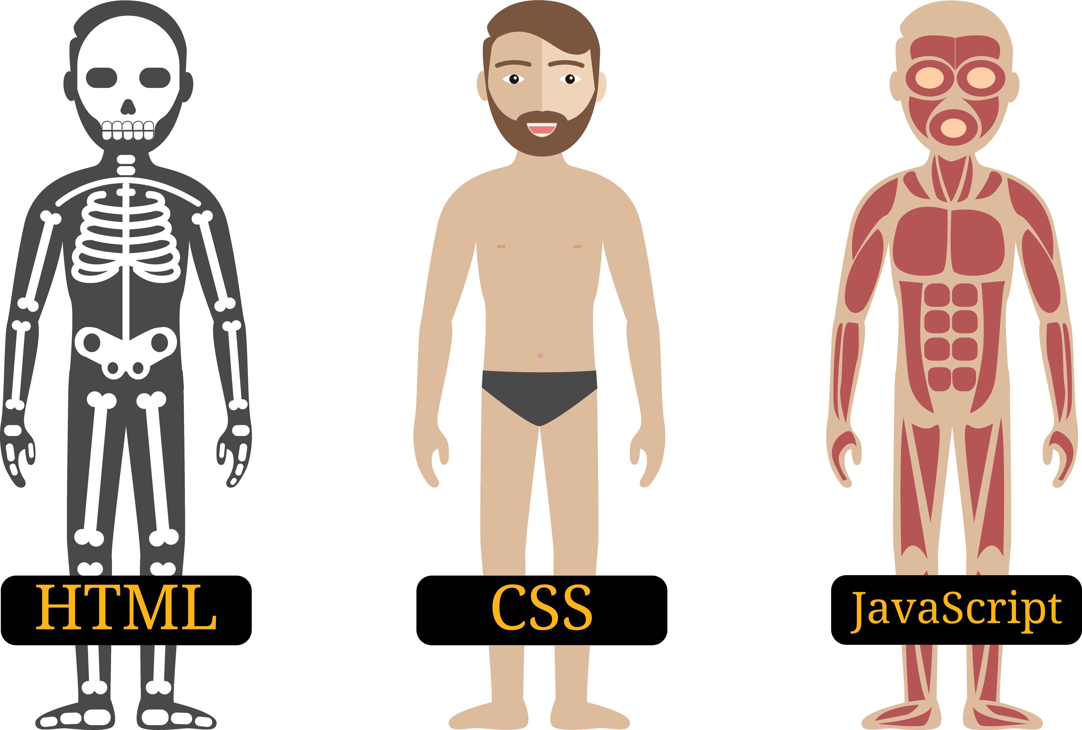 HTML, CSS en JavaScript